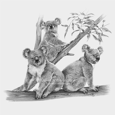 Cute koala bears, family of koala bears, koala bear babies