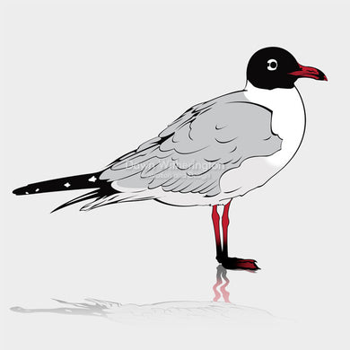 This is a cute graphical illustration of a laughing gull (Leucophaeus atricilla).