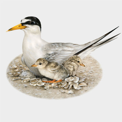 Nesting least tern with chicks and egg