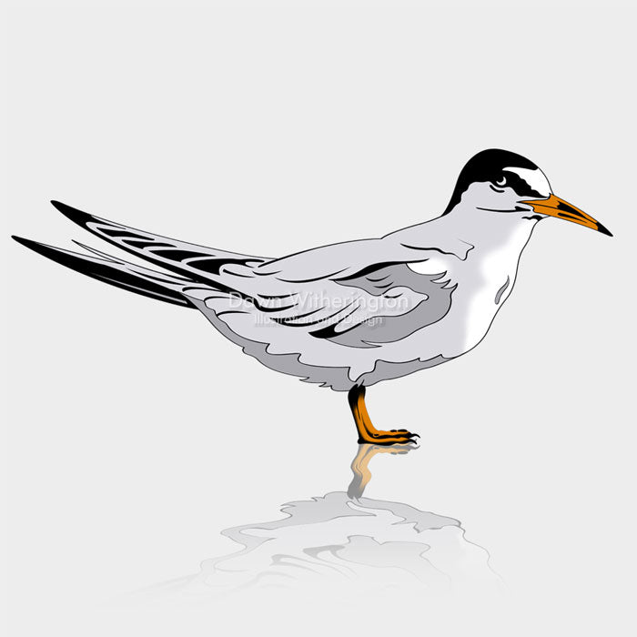 This is a cute graphical illustration of a least tern (Sternula antillarum).