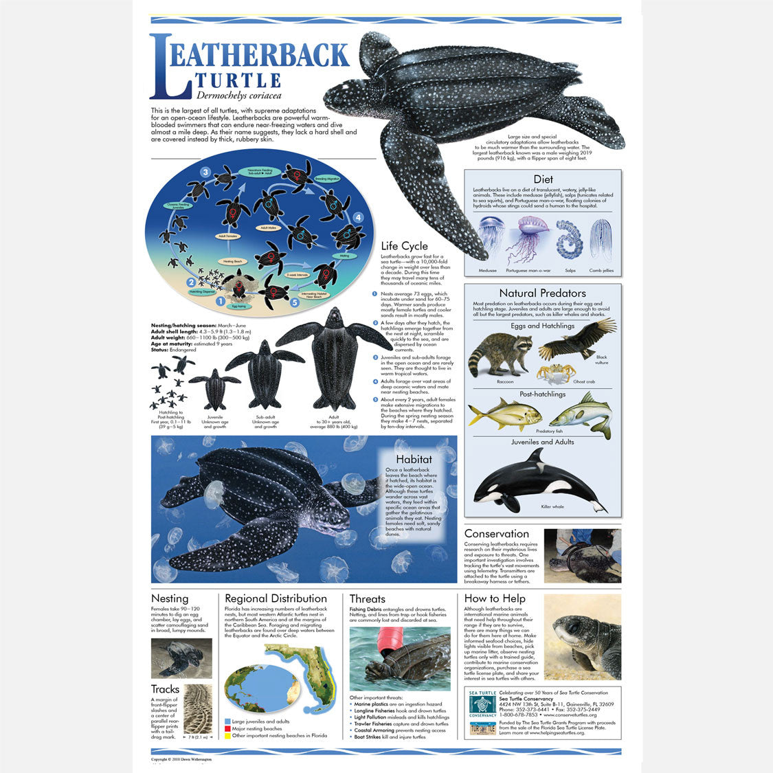 This beautiful poster provides information about the leatherback sea turtle.