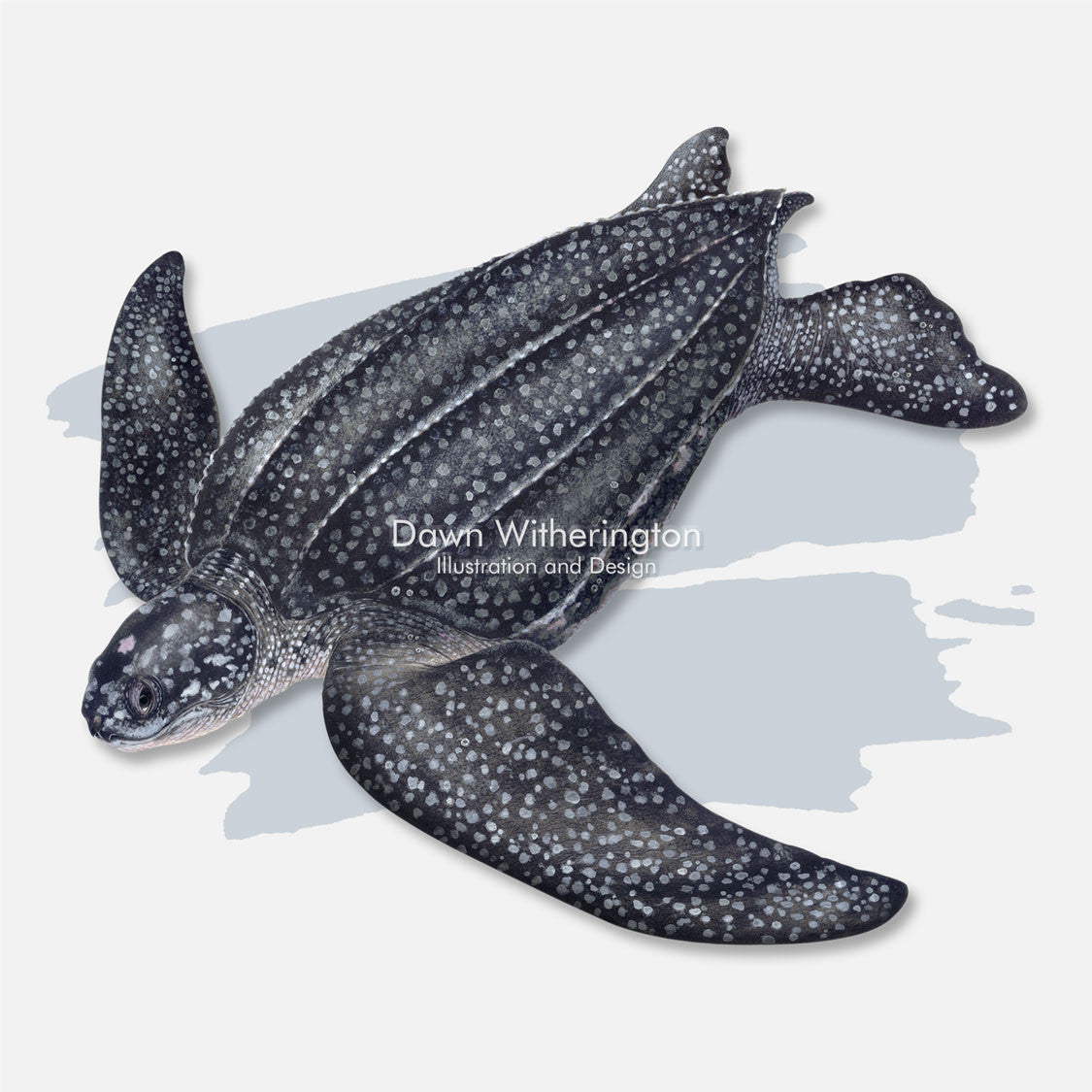 This beautiful illustration is of a leatherback sea turtle, Dermochelys coriacea, with a splash graphic.