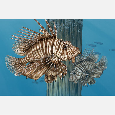 This illustration is of a pair of red lionfish (Pterois volitans) around dock piling.