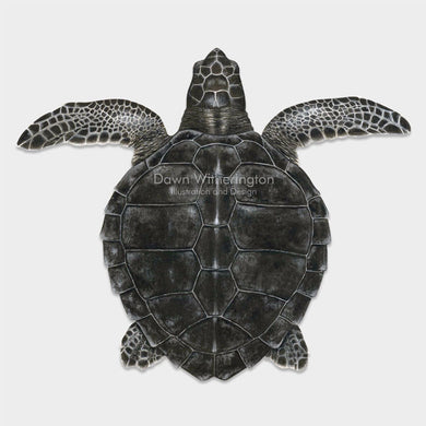This beautiful drawing of a juvenile Kemp's ridley sea turtle (Lepidochelys kempii) is biologically accurate in detail.