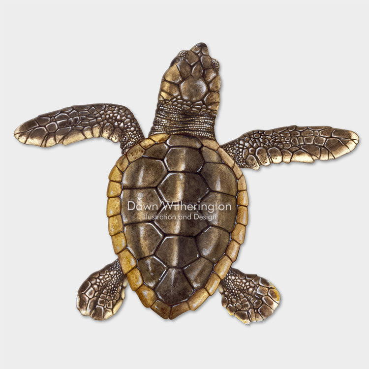 This beautiful drawing of a hatchling loggerhead sea turtle, Caretta caretta, is biologically accurate in detail.