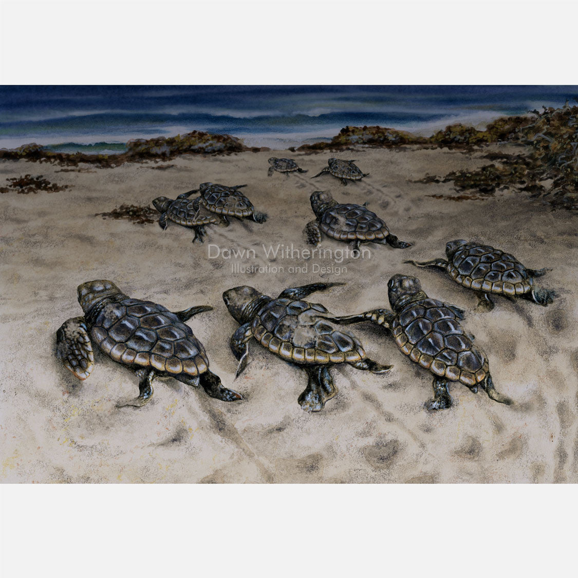 This beautiful illustration is of loggerhead sea turtle hatchlings (Caretta caretta) scurrying to the sea after emerging from their nest.