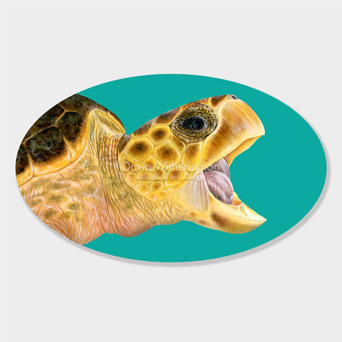 This beautiful drawing of the head of a loggerhead sea turtle, Caretta caretta, is biologically accurate in detail.