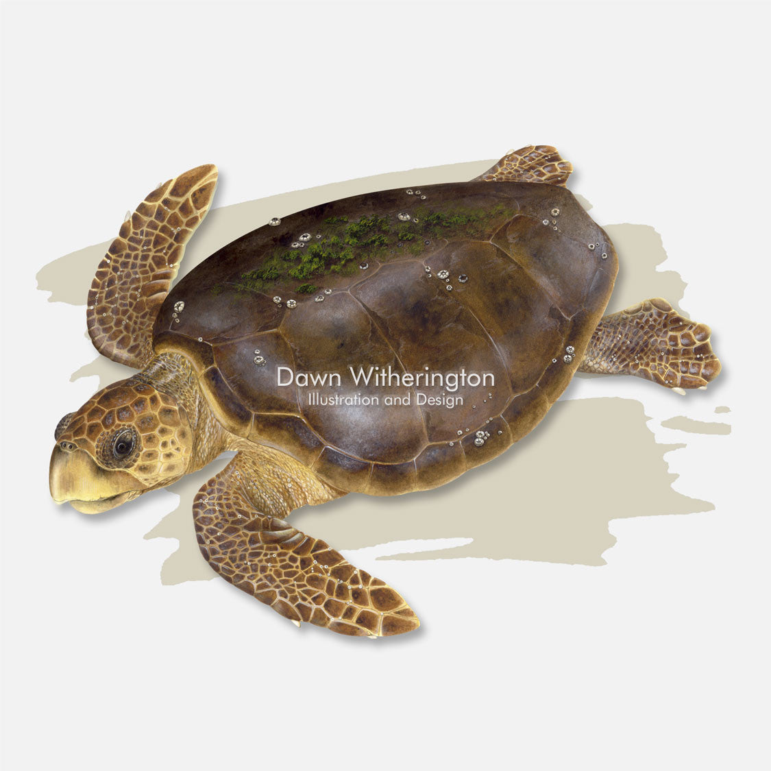 This beautiful illustration is of a loggerhead sea turtle, Caretta caretta, over a swash graphic.