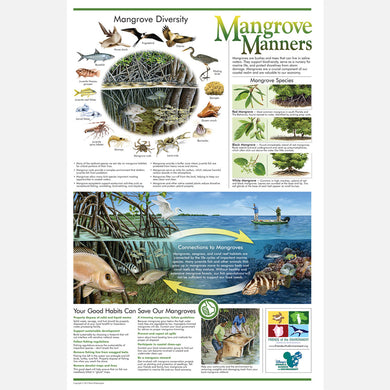 This beautiful poster provides information on the value of mangroves and the harmful effects human activity can have on them.
