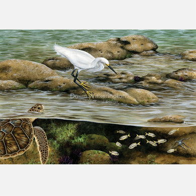 This beautiful, highly detailed and accurate illustration is of life on a Sabellariid worm reef. The art features and snowy egret and a juvenile green turtle.