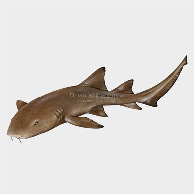 This beautiful illustration of a a nurse shark, Ginglymostoma cirratum, is biologically accurate in detail.