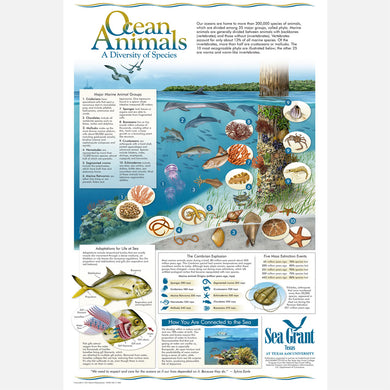 This beautiful poster provides information on the diversity of ocean animals and their habitat.