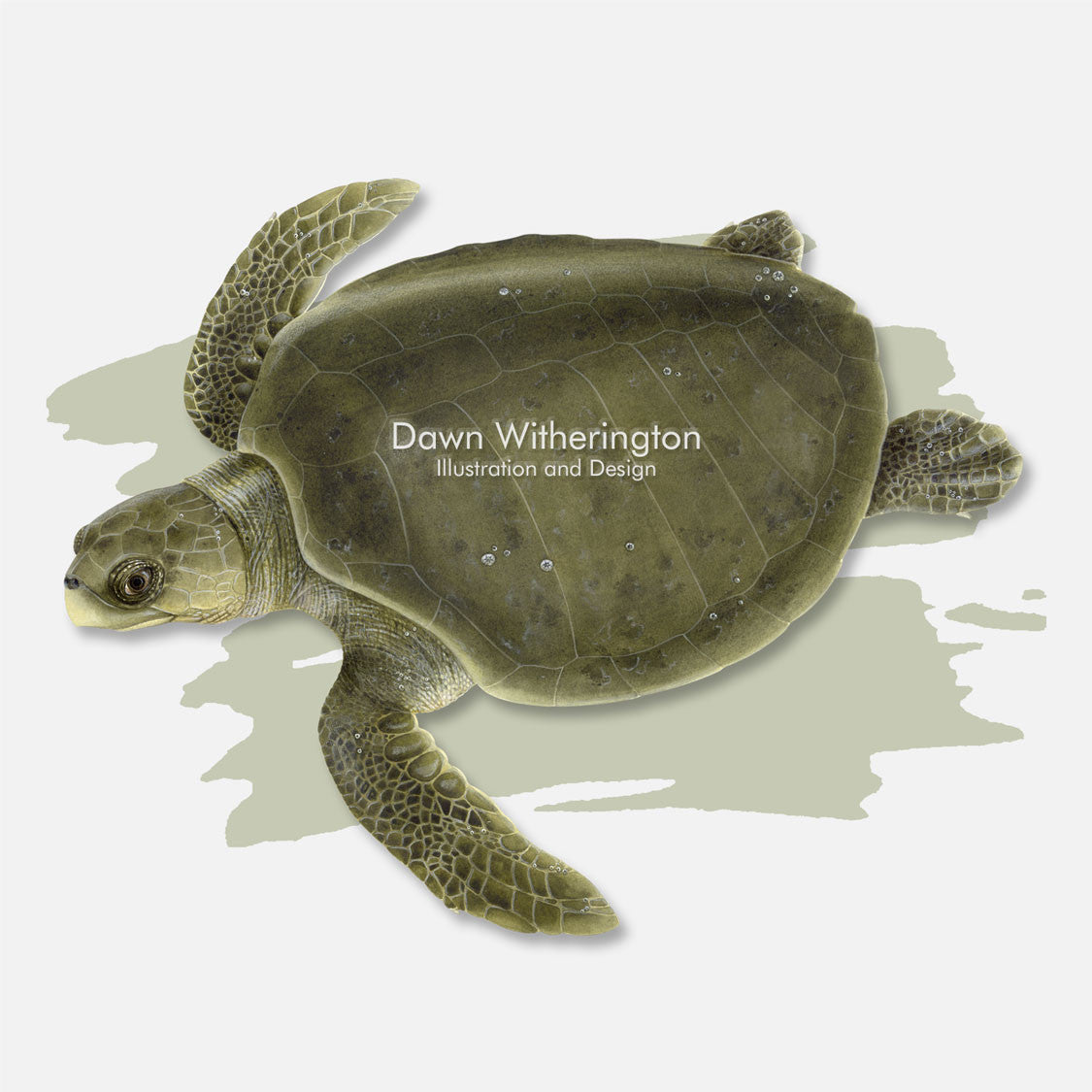 This beautiful illustration is of an olive ridley sea turtle, Lepidochelys olivacea, over a swash graphic.