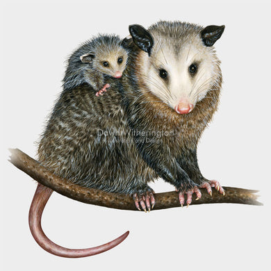 Virginia opossum with baby (joey)