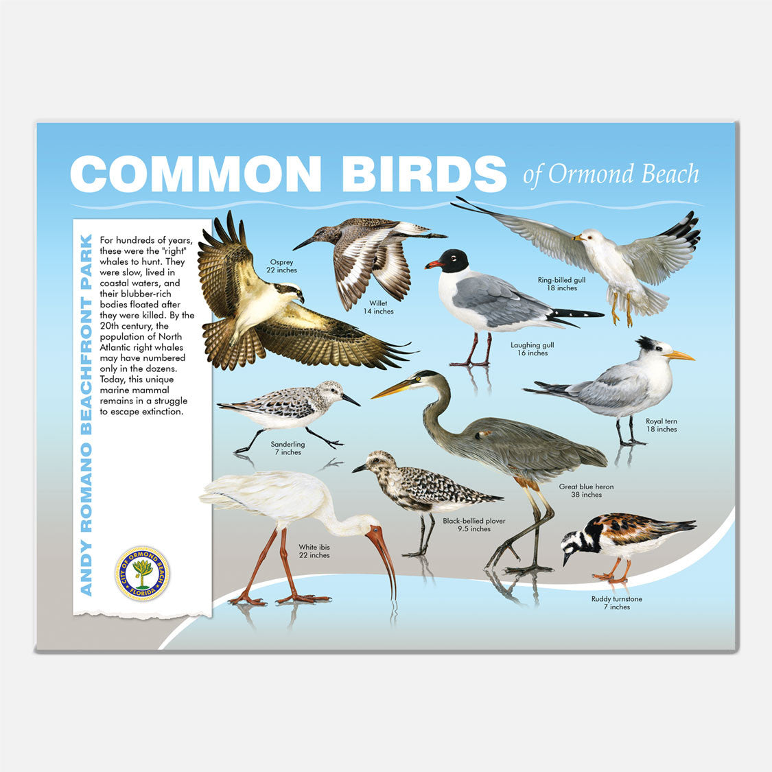 This beautifully illustrated educational display describes and identifies beach birds of Andy Romano Beachfront Park, Ormond Beach, Florida.