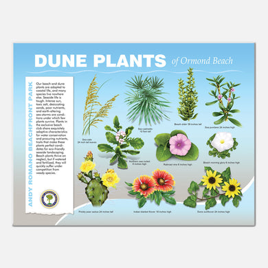 This beautifully illustrated educational display describes and identifies dune plants of Andy Romano Beachfront Park, Ormond Beach, Florida.