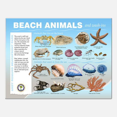 This beautifully illustrated educational display describes and identifies beach animals of Andy Romano Beachfront Park, Ormond Beach, Florida.