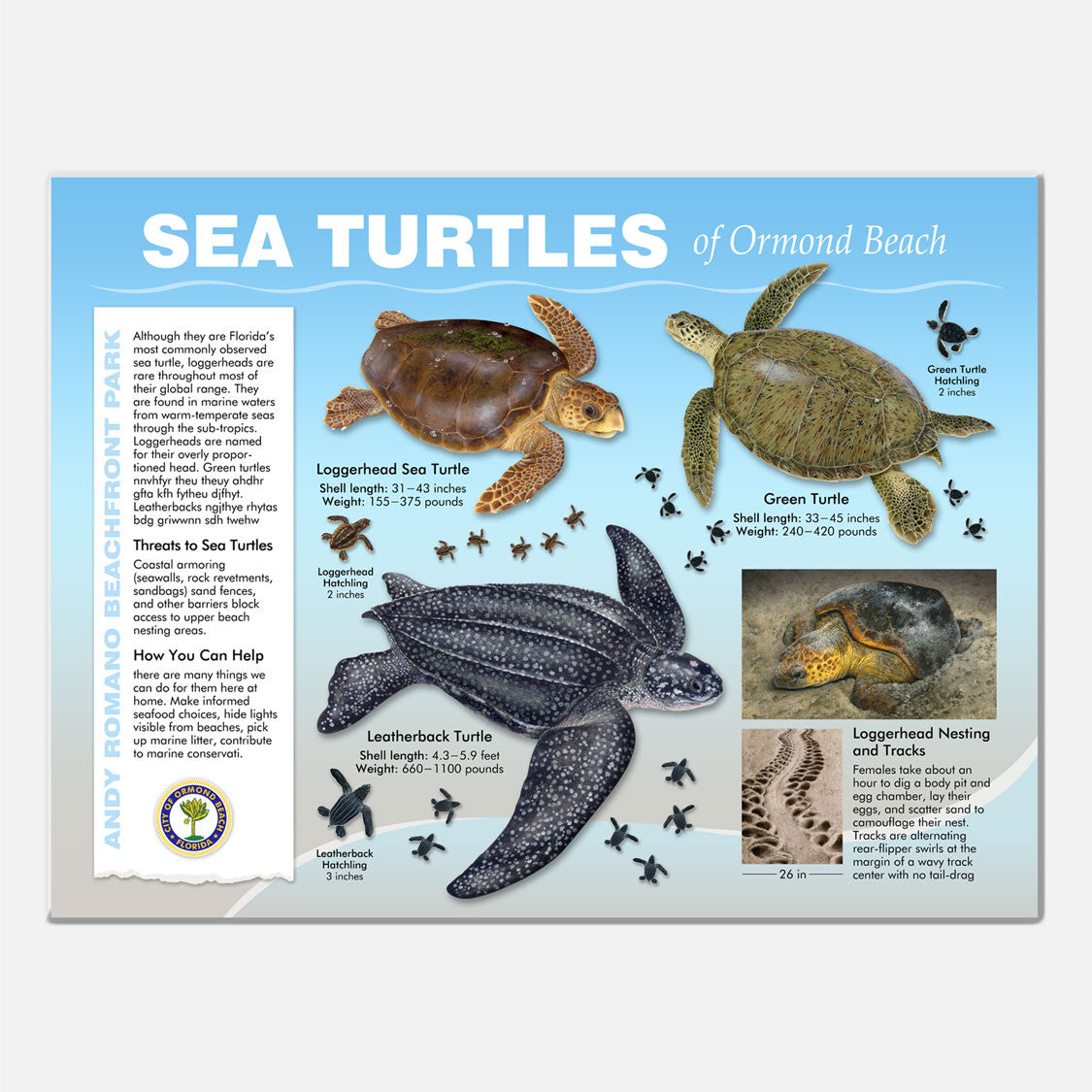 This beautifully illustrated educational display describes and identifies sea turtles that occur at Andy Romano Beachfront Park, Ormond Beach, Florida.