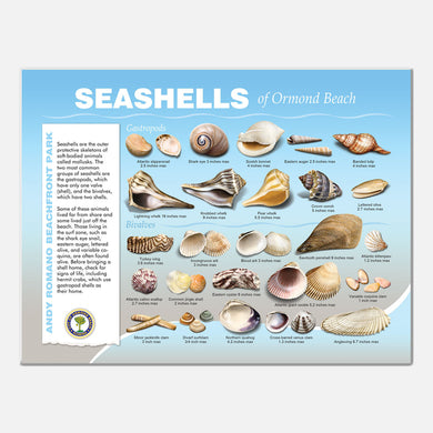 This beautifully illustrated educational display describes and identifies seashells of Andy Romano Beachfront Park, Ormond Beach, Florida.