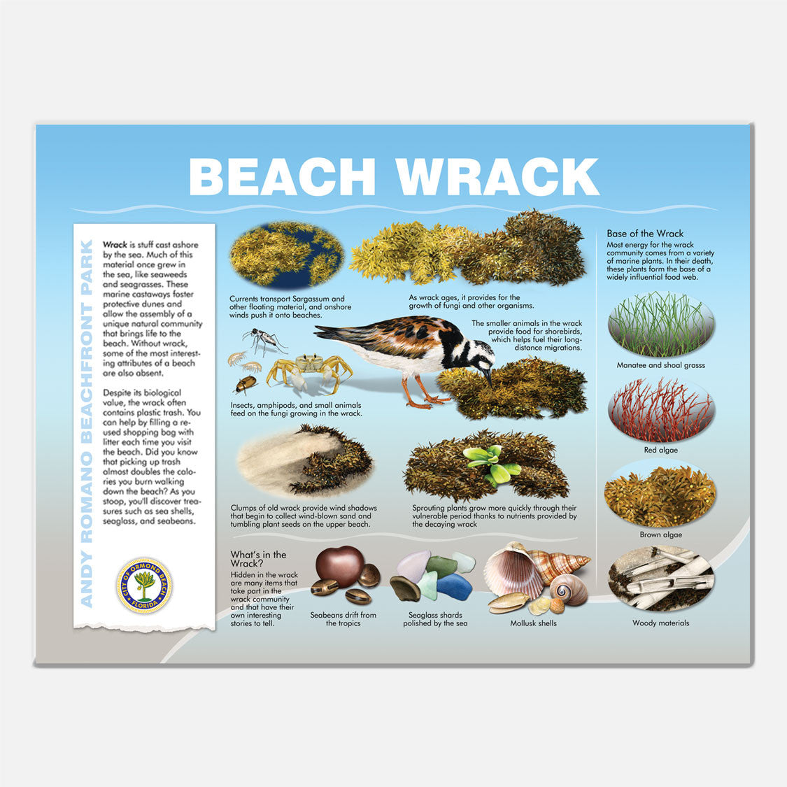 This beautifully illustrated educational display describes the beach wrack at Andy Romano Beachfront Park, Ormond Beach, Florida.