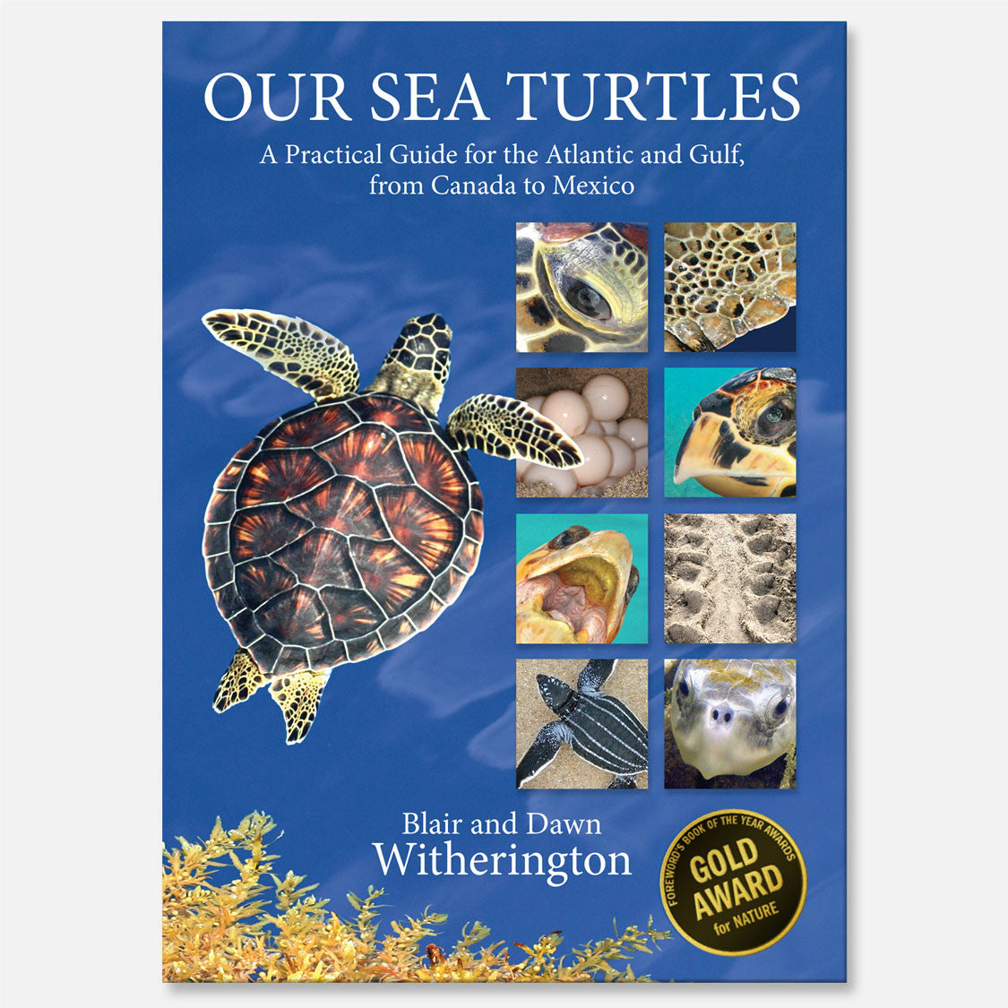 Our Sea Turtles by Blair and Dawn Witherington