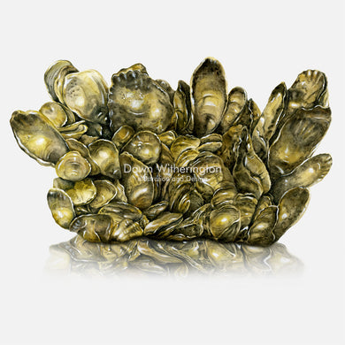 This illustration of a clump of Eastern Oysters (Crassostrea virginica) is accurate in detail.