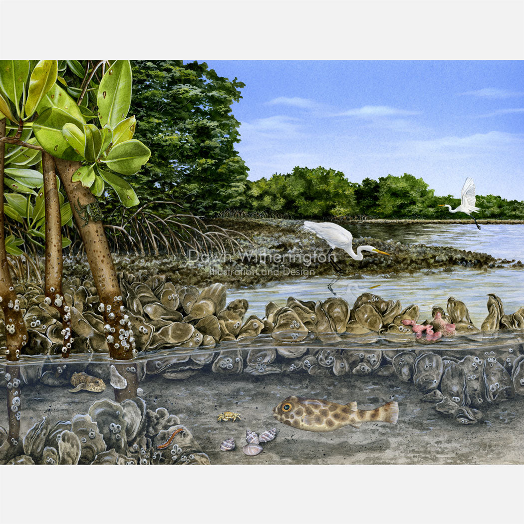 This beautiful, highly detailed and accurate illustration is of an eastern oyster reef, Crassostrea virginica, and associated critters.