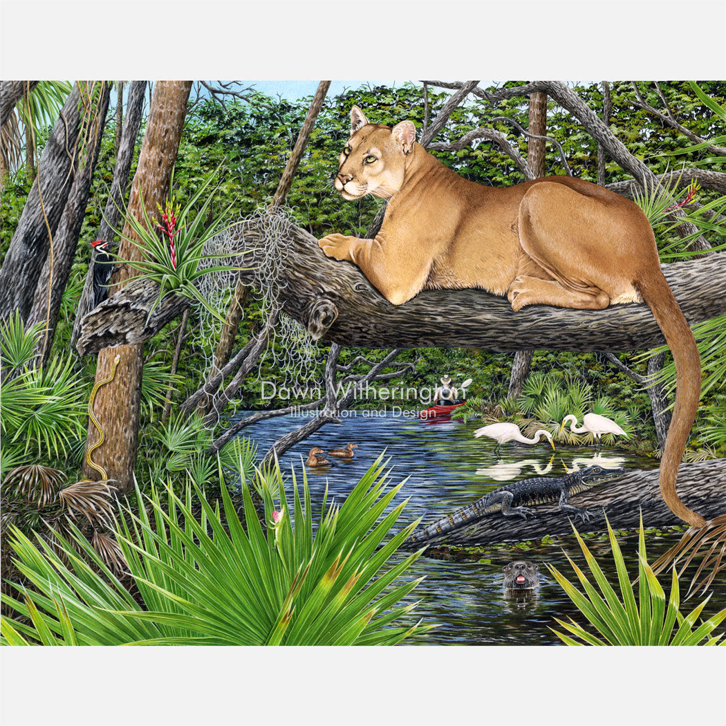 This beautiful, highly detailed illustration is of a Florida panther amongst other wildlife in river habitat.