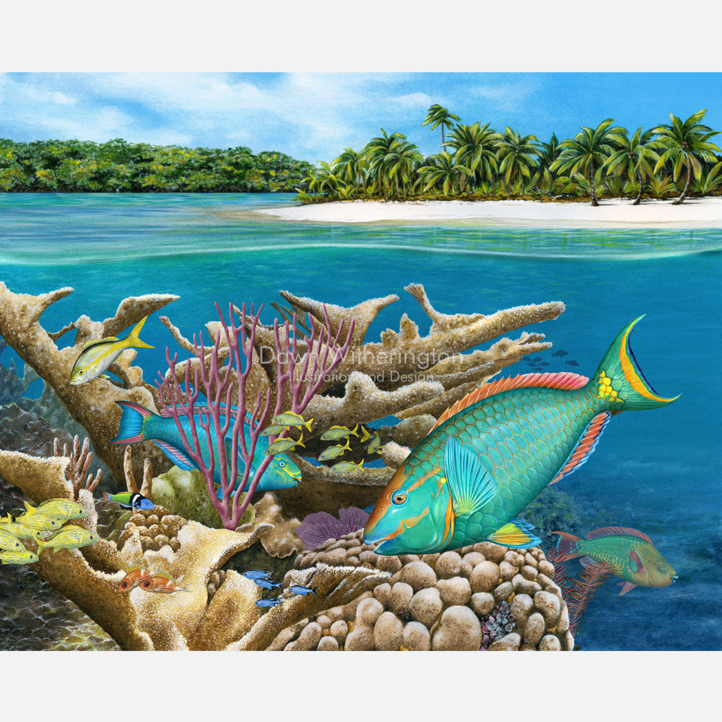 This beautiful illustration is of several parrotfish on a Bahamian coral reef. The art is accurately portrayed in high detail.