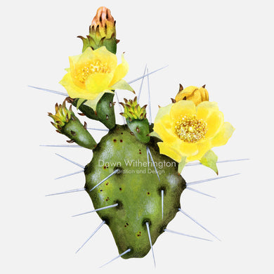Eastern prickly pear cactus (devil's tongue)