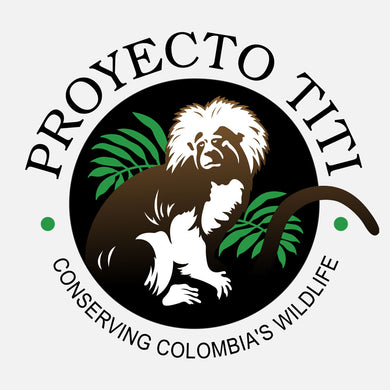 This program is designed to provide useful information to assist in the long-term preservation of the cotton-top tamarin and to develop local community advocates to promote conservation efforts in Colombia.