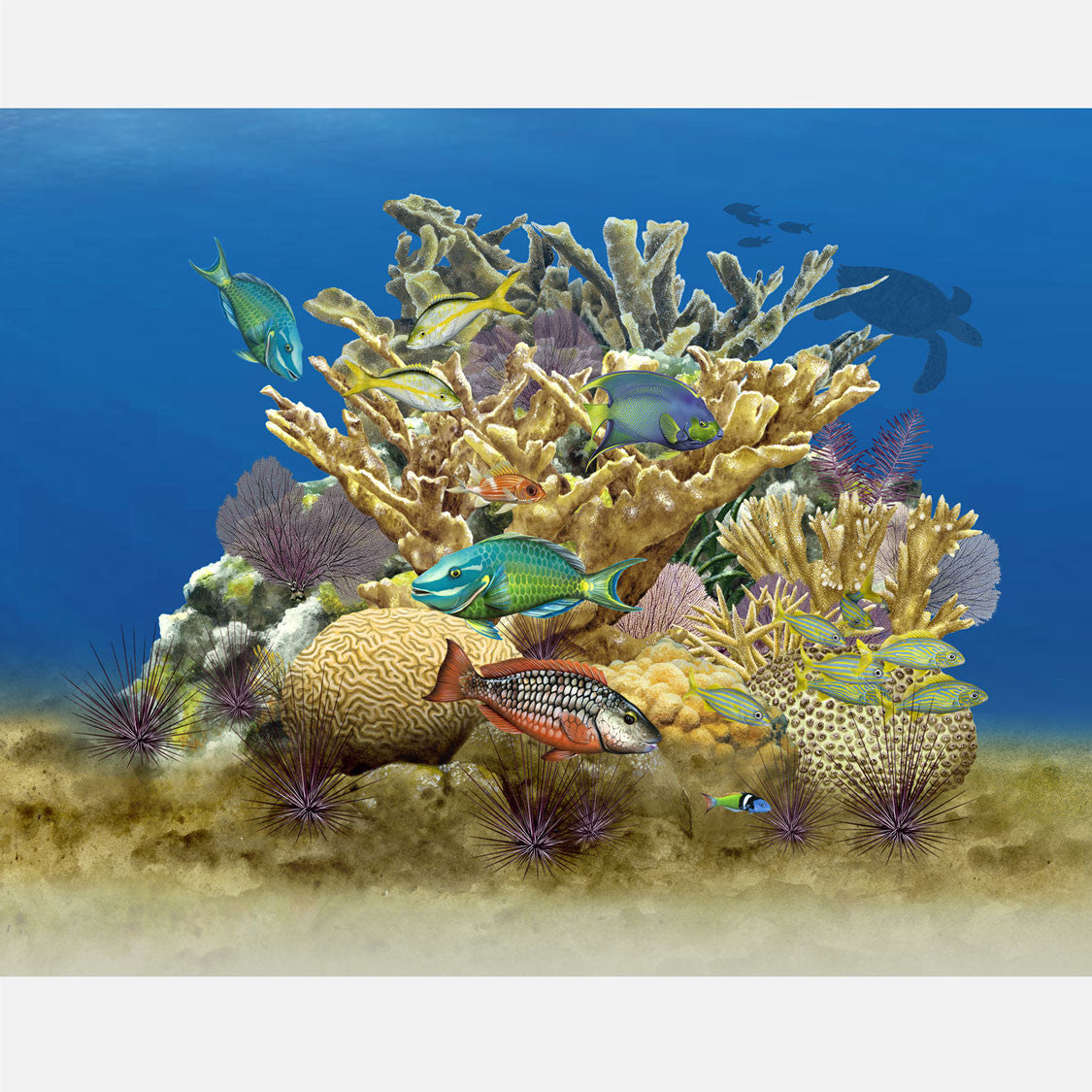 This beautiful, highly detailed illustration is of life on an Atlantic coral reef. The art features several species of reef fish and corals.