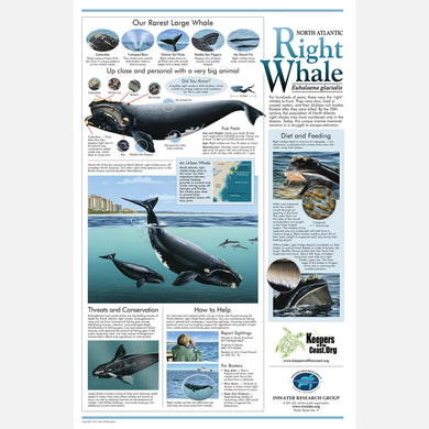 This beautiful poster provides information on the North Atlantic right whale (eubalaena glacialis).