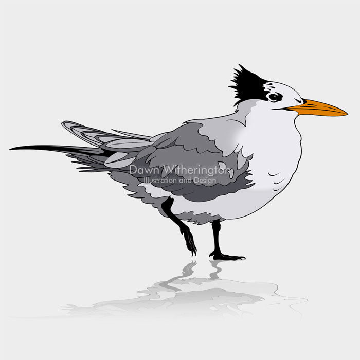 This is a cute graphic illustration of a royal tern (Thalasseus maximus).
