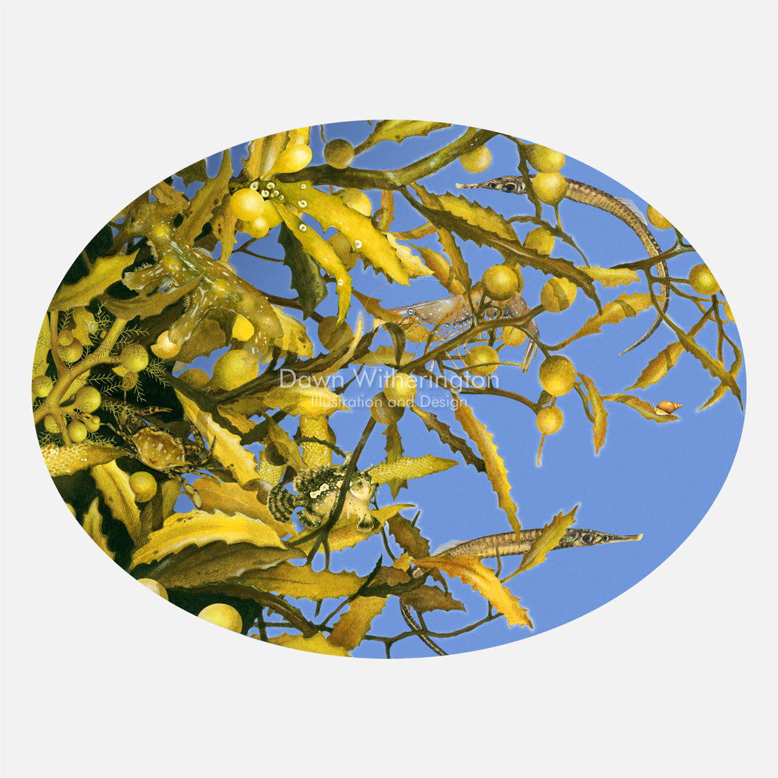 This illustration is of small animals associated with the sargassum community. The art features sargassum fish, sargassum shrimp, a sargassum nudibranch, and other animals found in sargassum.