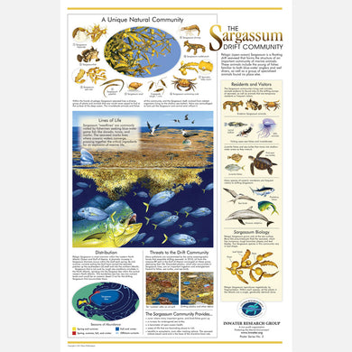 This beautiful poster provides information on the importance of the open-ocean sargassum (seaweed) community.