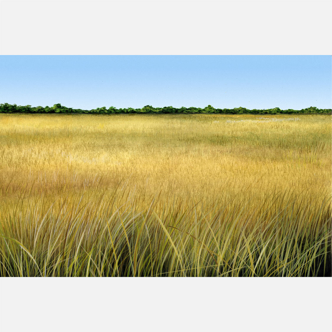This beautiful illustration is of a Florida sawgrass prairie.