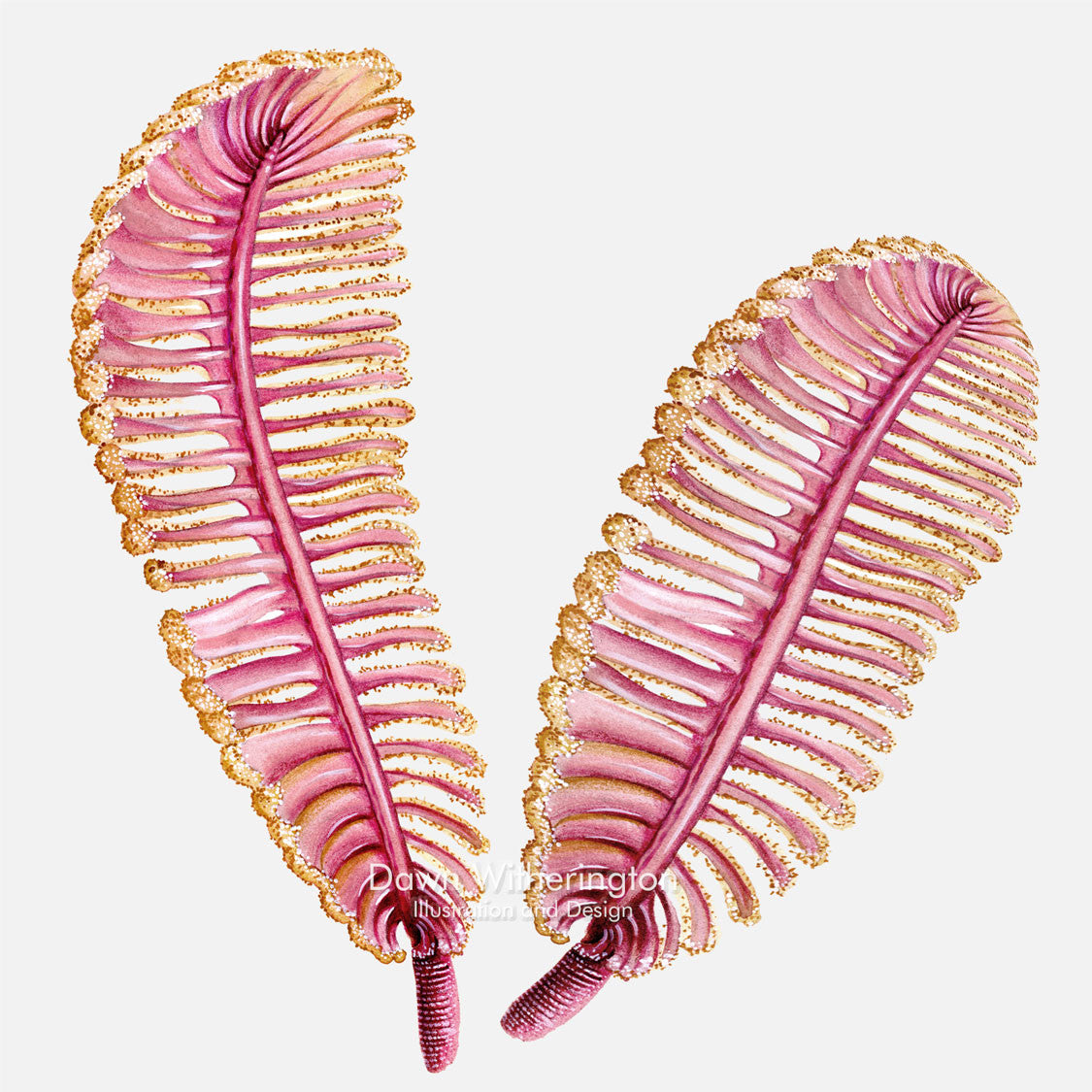 This beautiful illustration of sea pens is accurate in detail.