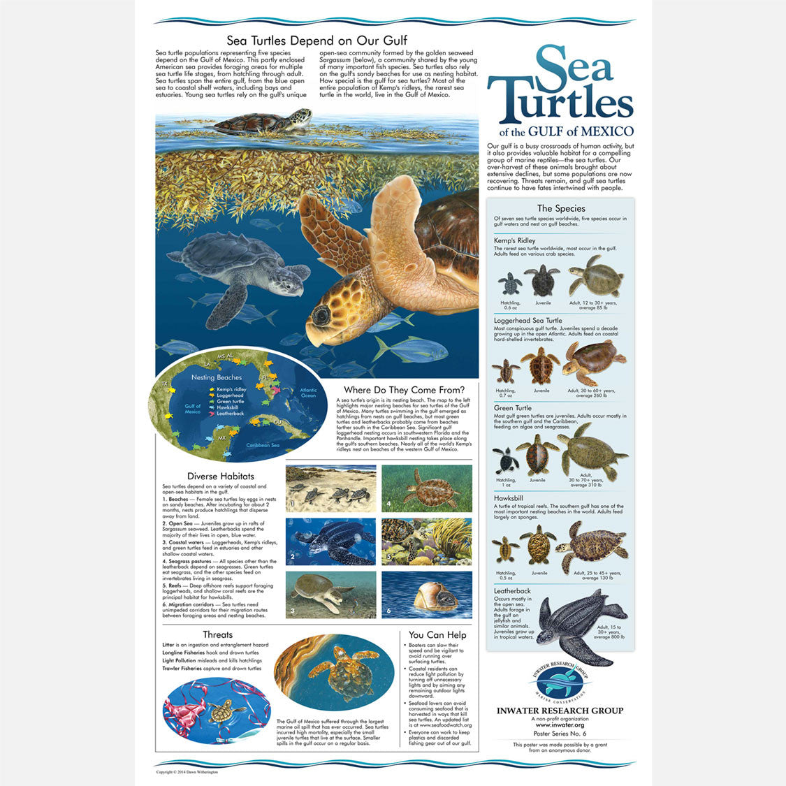 This beautiful poster provides information and identification of the five sea turtle species found in the Gulf of Mexico.