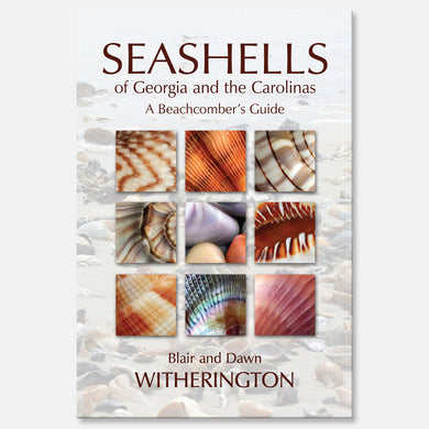 Seashells of Georgia and the Carolinas by Blair and Dawn Witherington