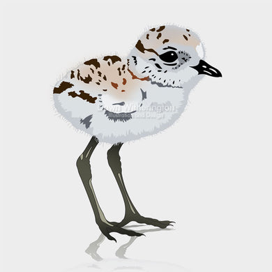 This is a cute graphic illustration of a snowy plover chick (Charadrius nivosus).