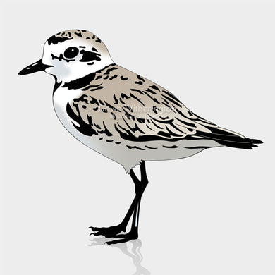 This is a cute graphic illustration of a snowy plover (Charadrius nivosus).