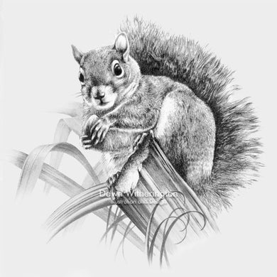 This lovely pencil drawing of an eastern gray squirrel, Sciurus carolinensis, is beautifully detailed.