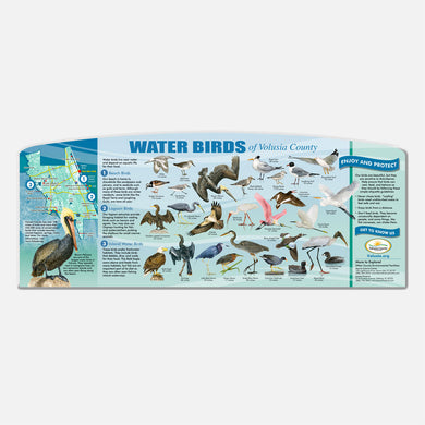 This beautifully illustrated educational display describes and identifies water birds of Volusia County.