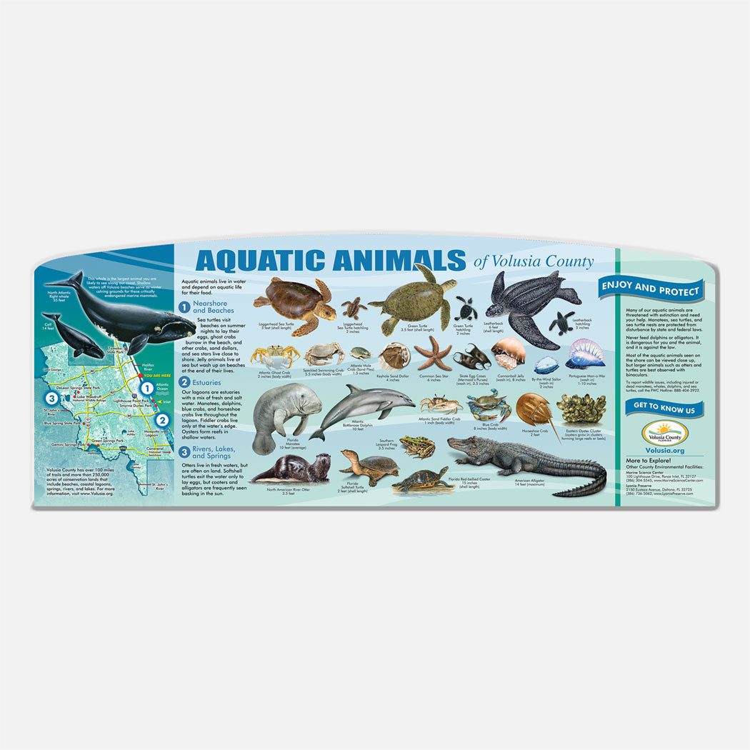 This beautifully illustrated educational display describes and identifies aquatic animals of Volusia County.