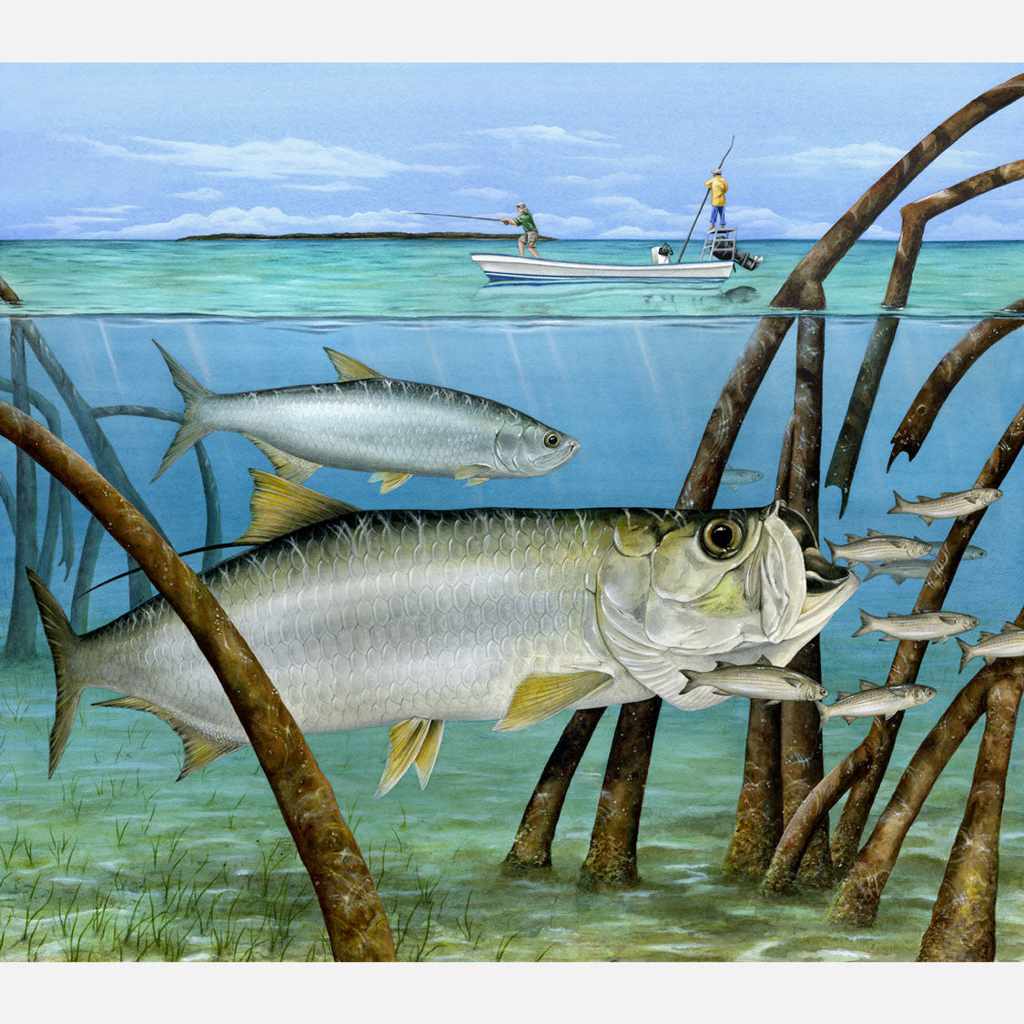This beautiful illustration of Atlantic tarpon, Megalops atlanticus, foraging on mullet in red mangroves is biologically accurate in detail.