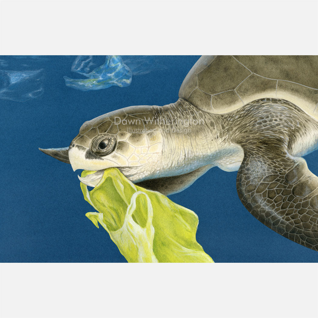 This illustration is of a Kemp's ridley sea turtle, Lepidochelys kempii, mistaking a plastic bag for food.