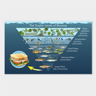 This is a detailed graphic illustration depicting the trophic levels of biomass in the Gulf of Mexico.