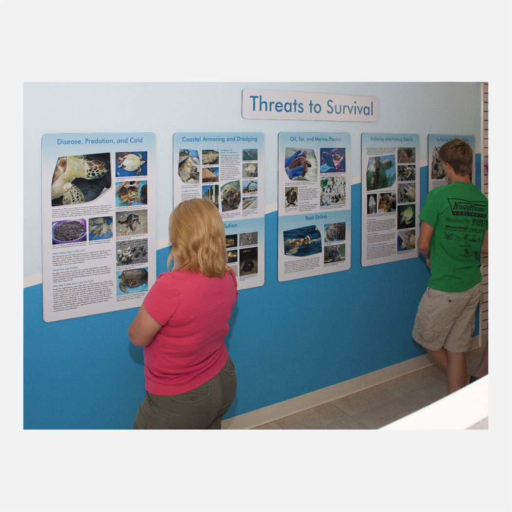 These educational displays were created for The Turtle Hospital in Marathon Florida.