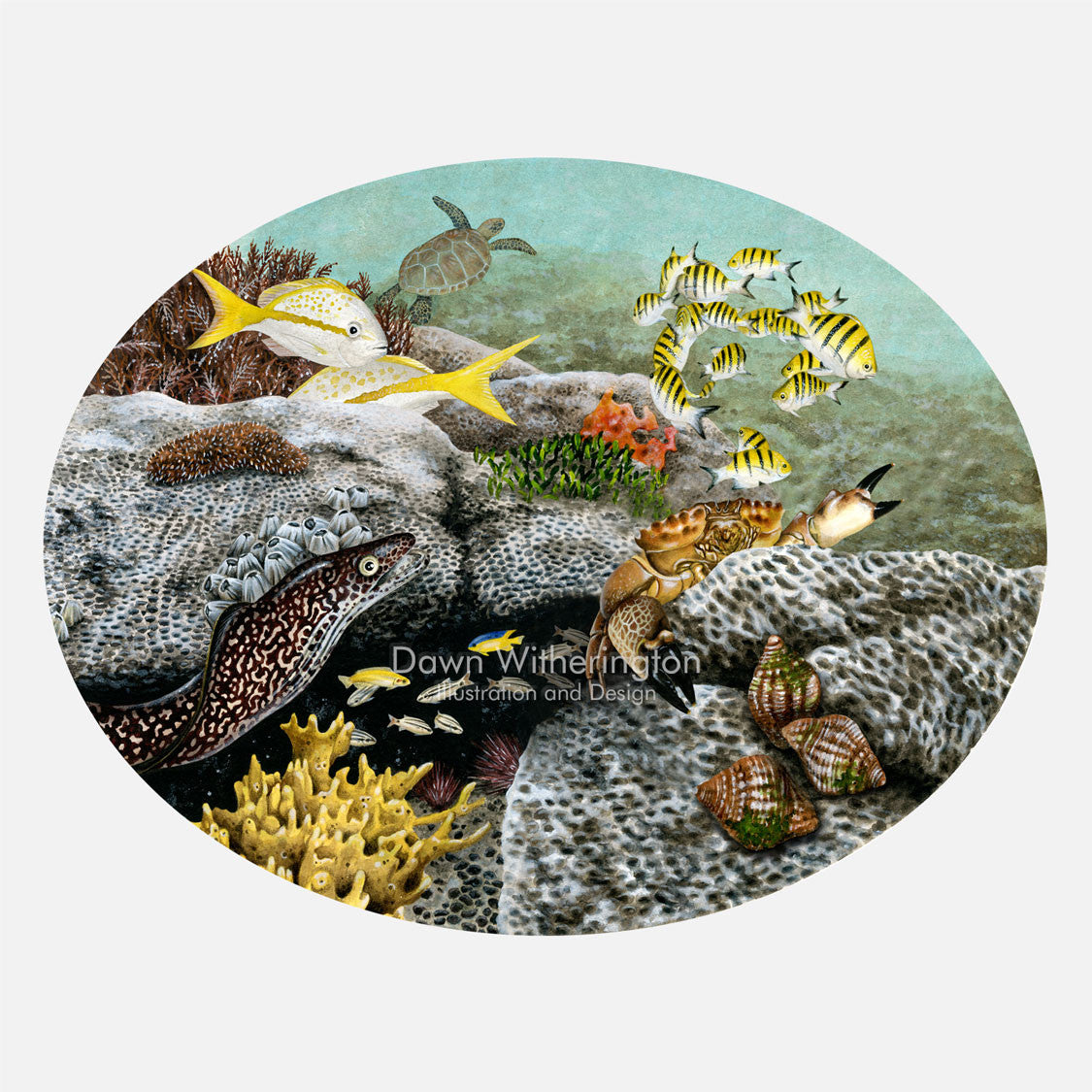 This illustration is of animals associated with wormrock (made by Sabellariid worms). The art features a stone crab, an eel, rock snails, several fish, and other critters living around wormrock.